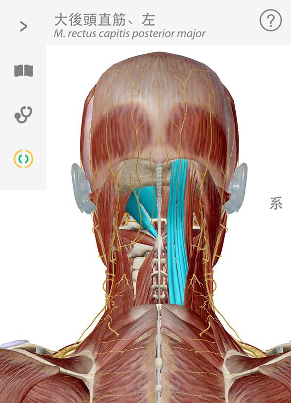 左 後頭部 が 痛い